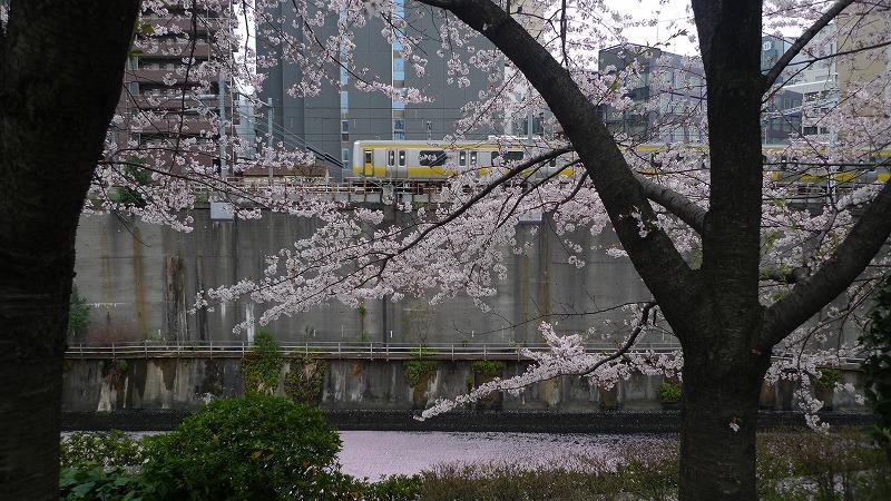 20130330神田川2.jpg